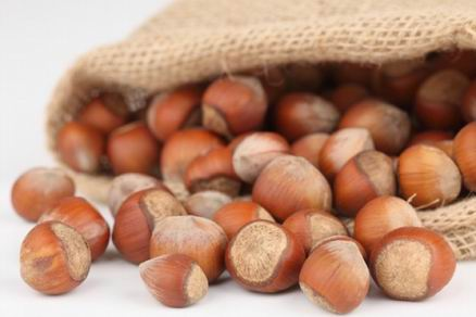 hazelnuts in shell