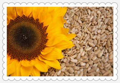sunflower seeds shelling
