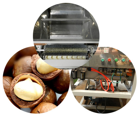 macadamia nut shell cutting machine details