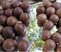 roasted_macadamia_nuts_which_has_been_sawn_by_macadamia_nuts_cutting_machine