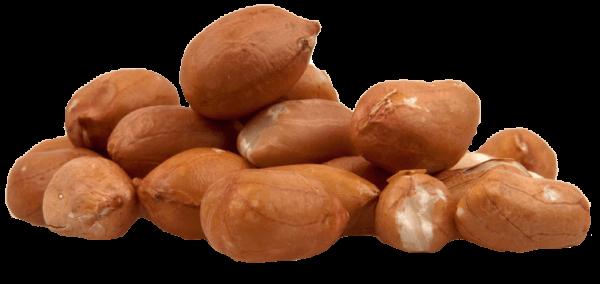 peanut kernels sieving
