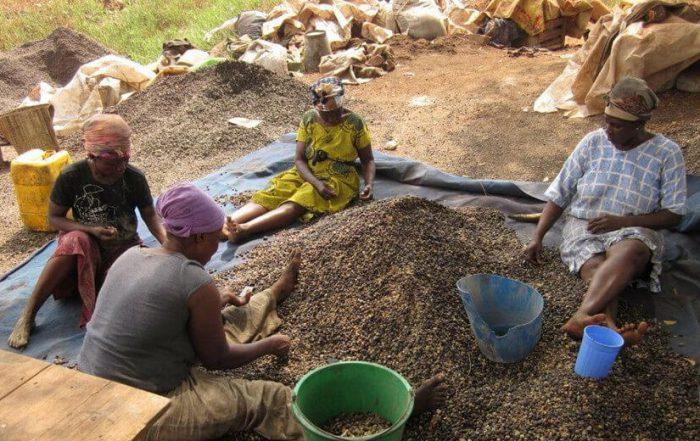 Nigeria palm kernel processing