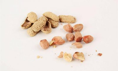 Peanut Kernel Shell Skin