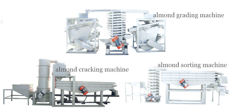 automatic almond cracking&sorting machine