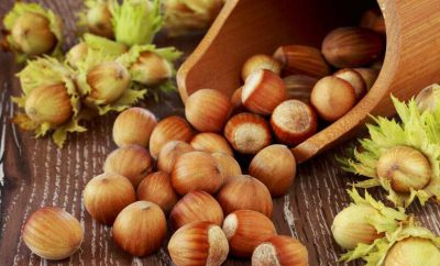 hazel nut processing