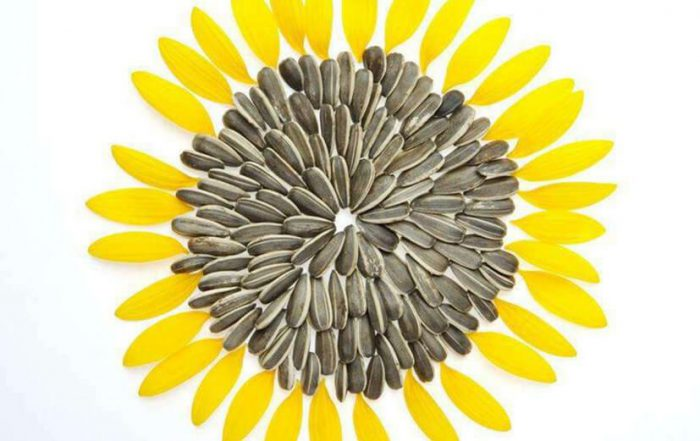 how to process sunflower seeds