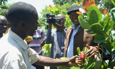 how to promote Zambian cashew industry