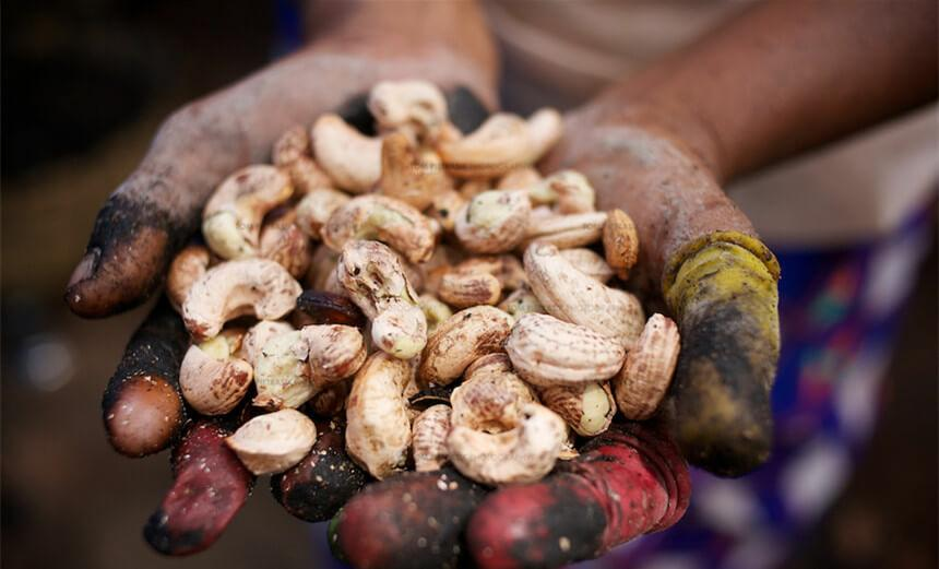 indian Cashew processing