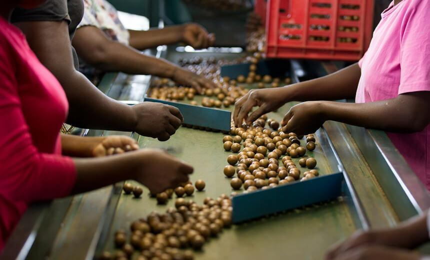 macadamia nut processing in south africa