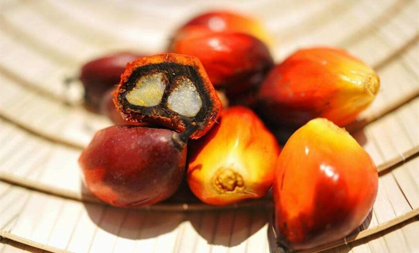palm nut processing profitable business
